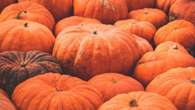 Kürbis Herbst